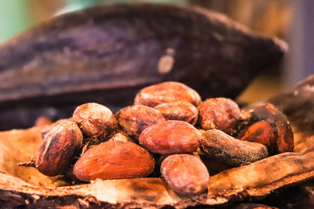 The Medical Benefits Of Cacao Drmaya Com